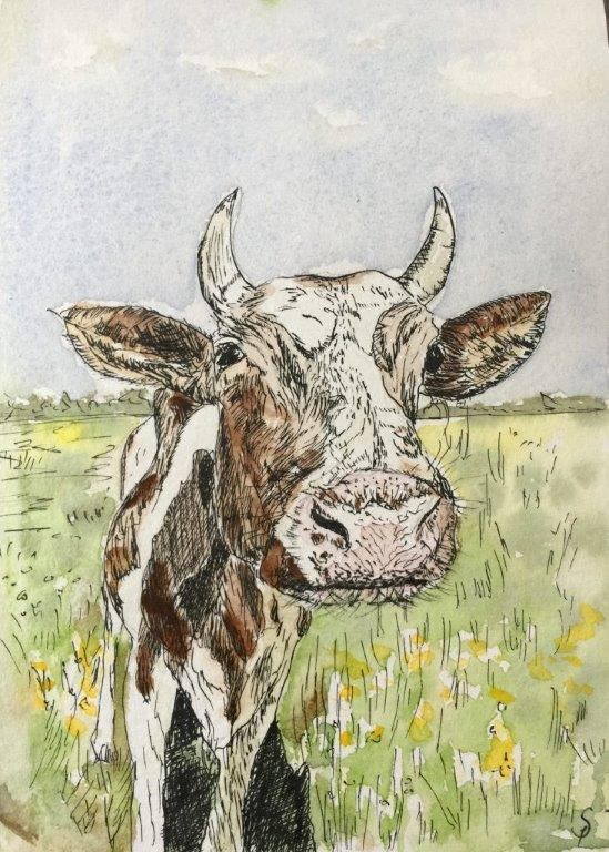 Mala the curious cow